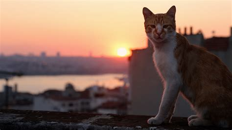 Kedi More Than A Film About Cats In Istanbul I Have Cat