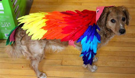 how to make puppy sleep a costume korrectkritterscom