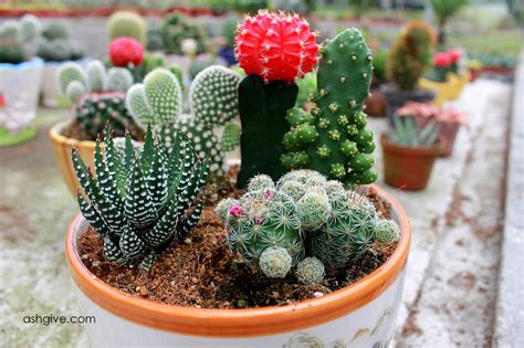 ashgive taman kaktus cameron highlands jalan jalan di cactus point cameron highlands