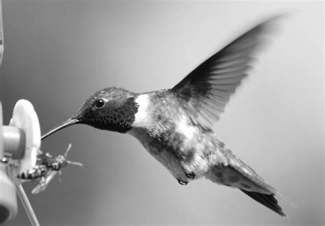 black and white images of birds 30 background
