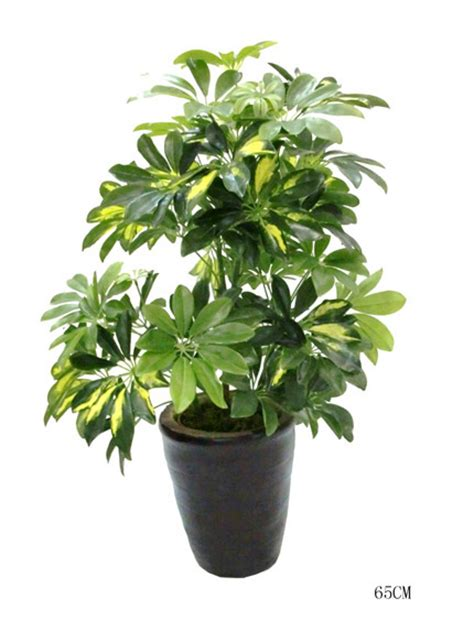 wholesale green artificial plant decorative make cheap outdoor artificial ornamental plants and