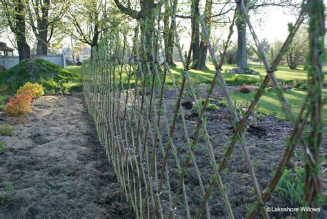 willows living willow fence hedge fedge