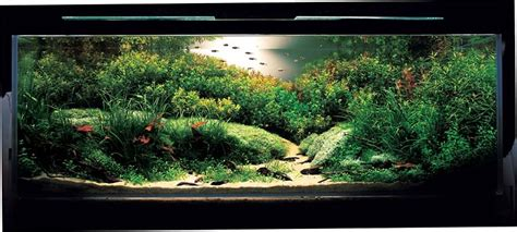 aquascape contest aquascape ideas