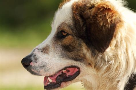 best farm dogs the best farm dogs are priceless countryside network