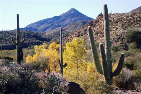 Arizona Access Search Cave Creek Ecosystem Iba 187 Arizona Important Bird Areas Program