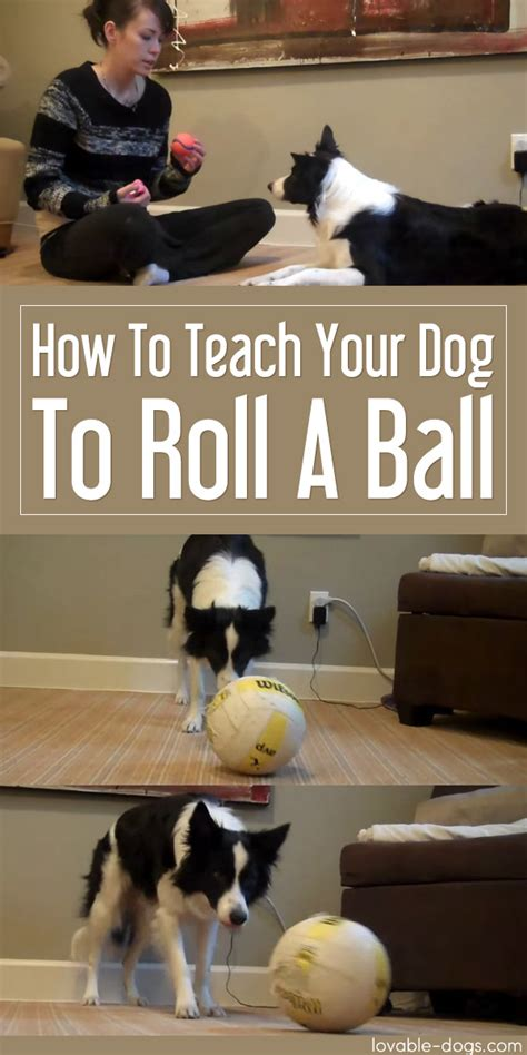 how to teach your to roll lovable dogs how to teach your to roll a lovable dogs