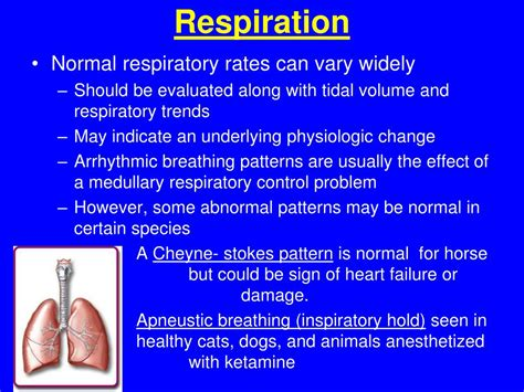 normal respiratory rate for dogs ppt pre peri and post operative care powerpoint presentation id 468775