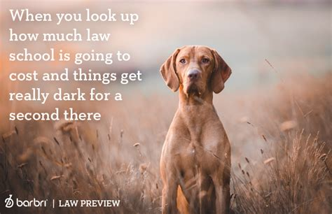 Law Dog Meme - your journey to becoming a 1l as told in dog memes law
