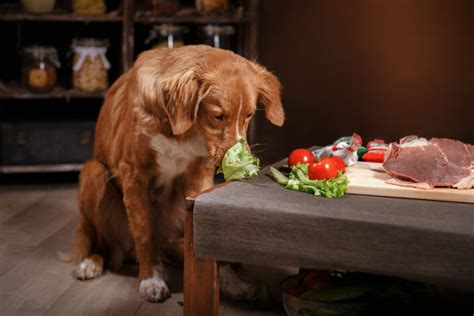 how often do puppies need to eat can dogs eat celery american kennel club