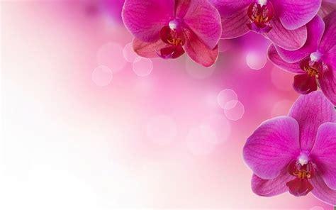 imagenes para fondo de pantalla alta resolucion boda rosa alta resoluci 243 n fondos de pantalla gratis