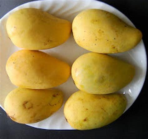 Harga Bibit Mangga Chokanan tanaman mangga chokanan jual tanaman hias