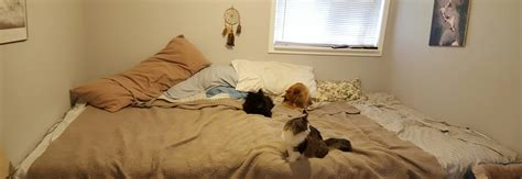 giant bed couple build bed to share with their cats and dogs