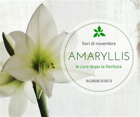 fiori a novembre fiori di novembre amaryllis le cure dopo la fioritura