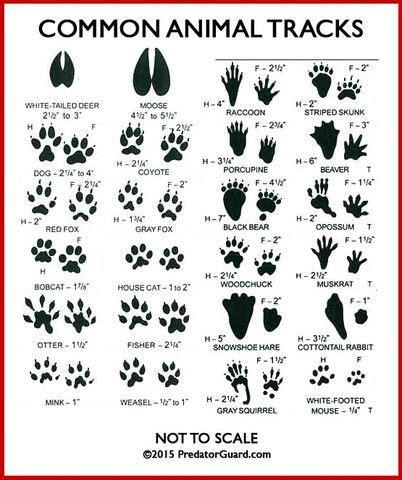 tattoo animal tracks 1000 images about tattoo woodburning on pinterest