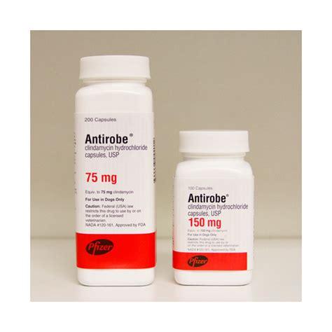 antirobe for dogs antirobe antirobe capsules antirobe for dogs antirobe for cats