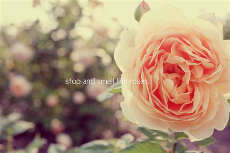 Stop Smell The Roses Or Carry The Garden With You A Herve Chapelier Jardin Pochette Makes It A Stylish Snap Fashiontribes Fashion by Stop And Smell The Roses Flickr Photo
