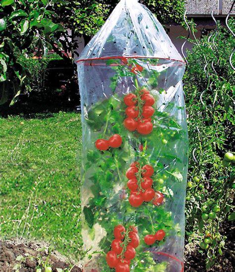 Wie Pflanze Ich Tomaten 4086 by Tomaten Kweekzak Vlies Folie Bij Baldur Nederland