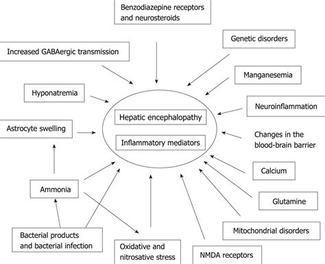 hepatic encephalopathy in dogs current pathogenetic aspects of hepatic encephalopathy and noncirrhotic hyperammonemic