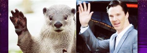 Benedict Cumberbatch Otter Meme - tastefully offensive on tumblr graham norton asks