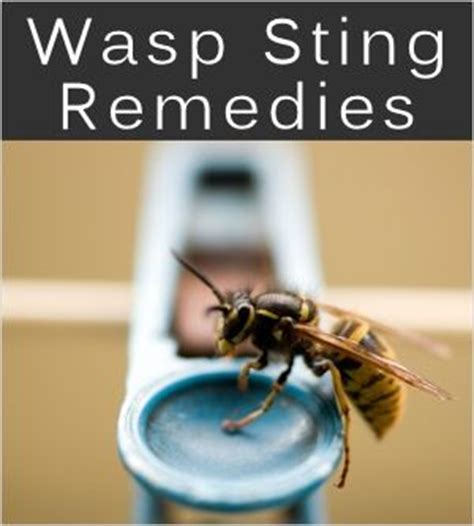 wasp stings treatments home remedies survival kit 72
