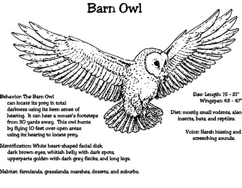 Barn Owl Coloring Pages Printable barn owl coloring coloring