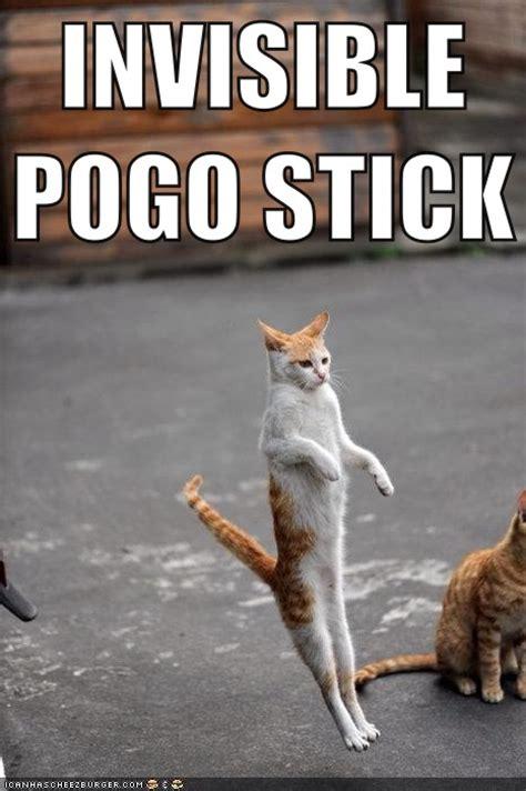 Cats Meme - invisible pogo stick cat meme cat planet cat planet