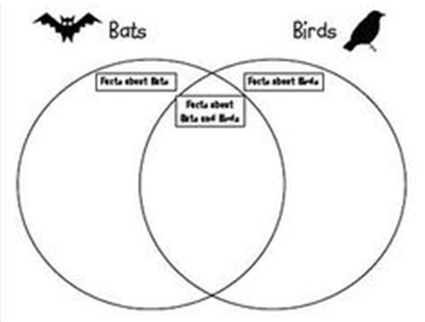 stellaluna venn diagram 1000 images about stellaluna on bats venn diagrams and bat facts