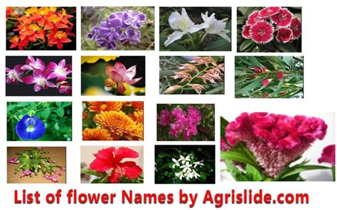 this is a big list of flower names with local names