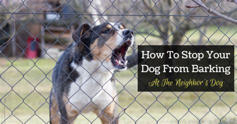 how to stop neighbors from barking how to stop your from barking at the s thedogtrainingsecret