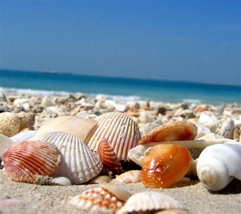 shells wallpaper images beachin shell and spaces