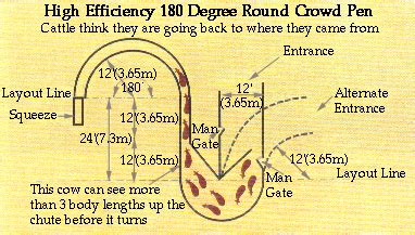 directions for laying out curved cattle handling
