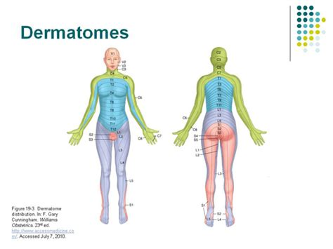 dermatomes map dermatome landmarks related keywords dermatome landmarks keywords keywordsking