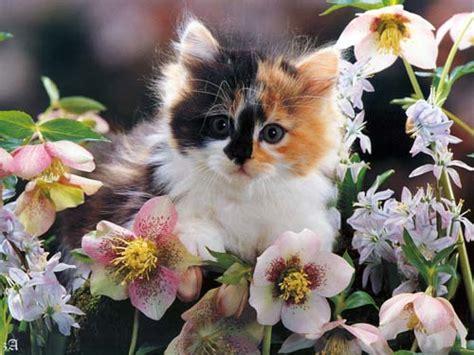 fiori di bach per gatti i fiori di bach per cani e gatti tutto ze