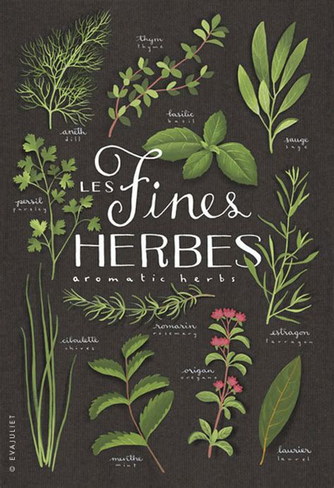 free printable herb poster fines herbes aromatics culinary herbs bilingual print