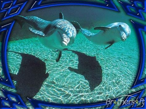 Download free dolphins underwater animated screensaver dolphins