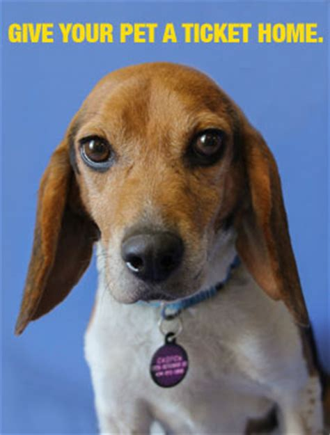 rabies for dogs near me microchipping rabies charlottesville albemarle spca