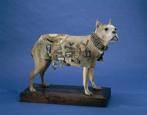 Sergeant Stubby Most Decorated 17 Best Images About Sergeant Stubby Famouse War Boxer On Memorial Stones Soldiers