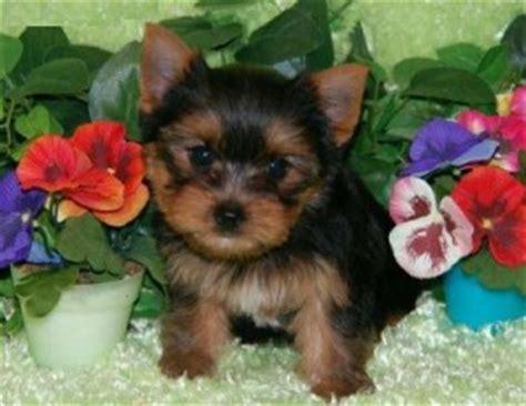 free puppies in kansas pets leavenworth ks free classified ads