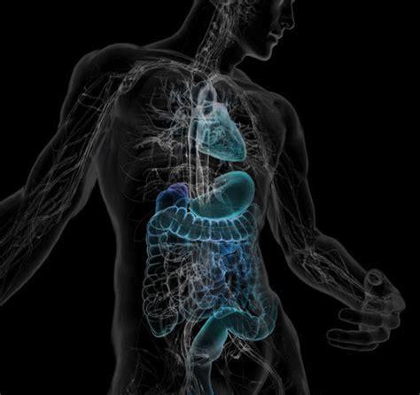 imagenes artisticas del cuerpo humano infograf 237 as m 233 dicas o ilustraciones del interior del