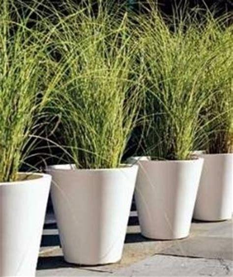 che pianta in vaso domande e risposte giardino