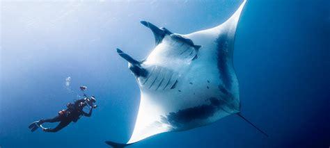 scuba dive trips scuba dive trips archives dive india outbound