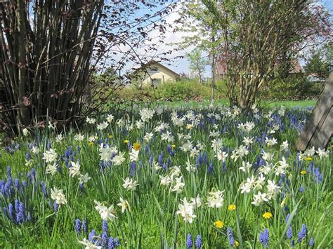 Britzer Garten Ostersonntag by Tulpen Satt Panke