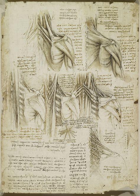 tavole anatomiche muscoli muscoli della colonna vertebrale superiore leonardo