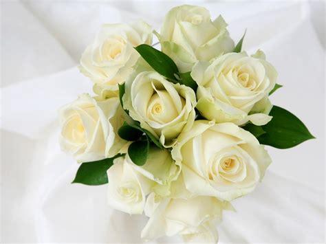 wallpaper bunga ros putih arti bunga mawar putih volvoab