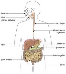 cm2 a 2011 2012 grand c abymes sciences la digestion