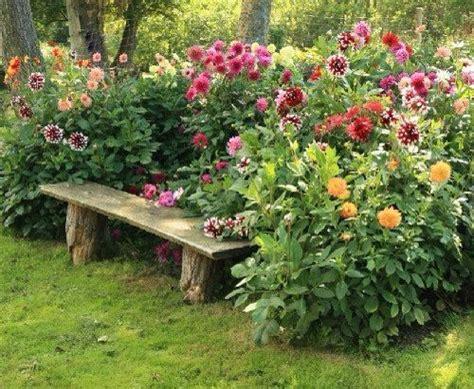 dahlia bench pin by sheryl bourne on prayer garden pinterest