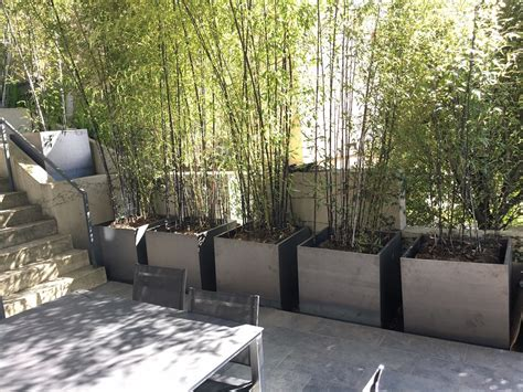bamboo in planters planter llc