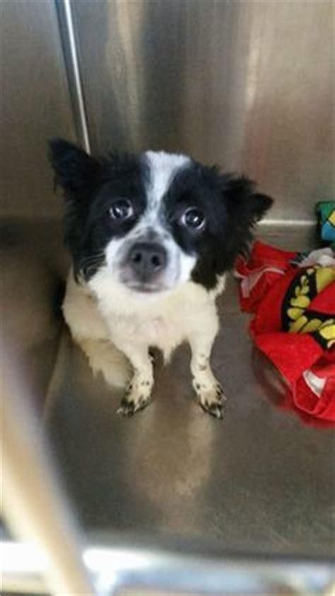 adoption places near me j o connor animal and adoption center do you me i was found near