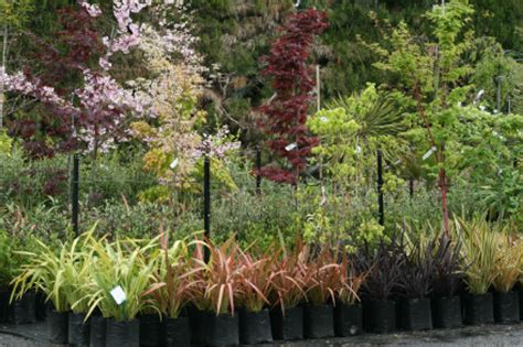 cherry trees fronds new zealand suppliers of new zealand ferns nz plants nz trees