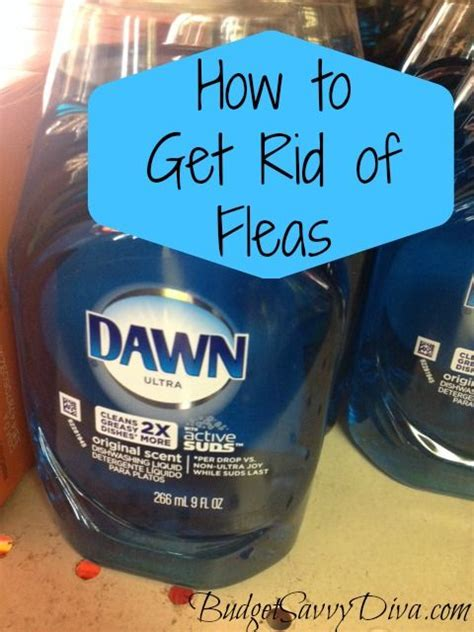how to get rid of fleas in my house does your dog or cat have fleas check out this at home remedy to get rid of fleas